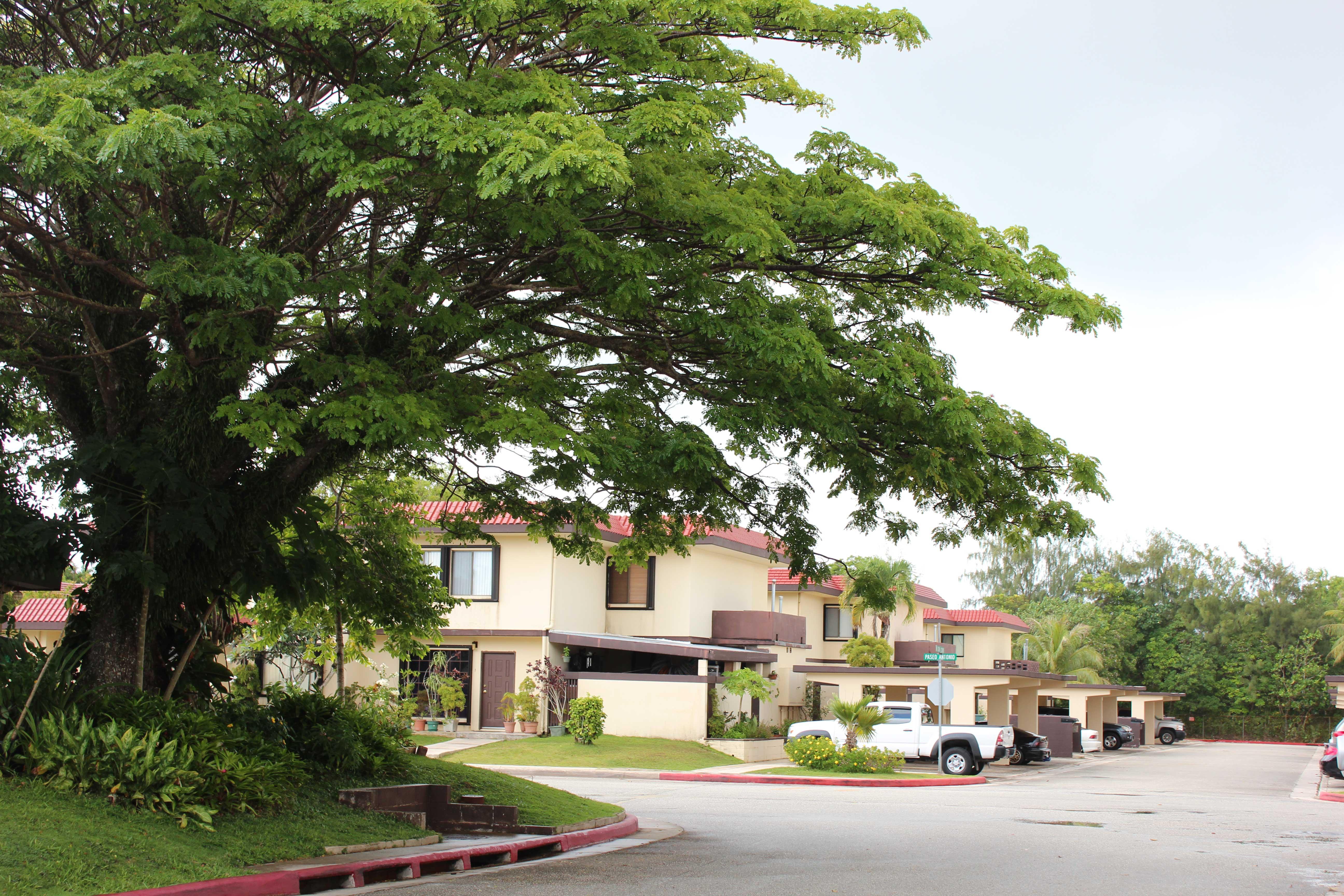 Perez-Acres-Guam---Tree